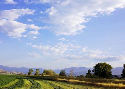 Scott Valley Alfalfa